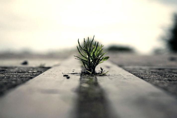 Una planta nace entre el cemento